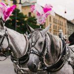 paseos en caballo en cracovia